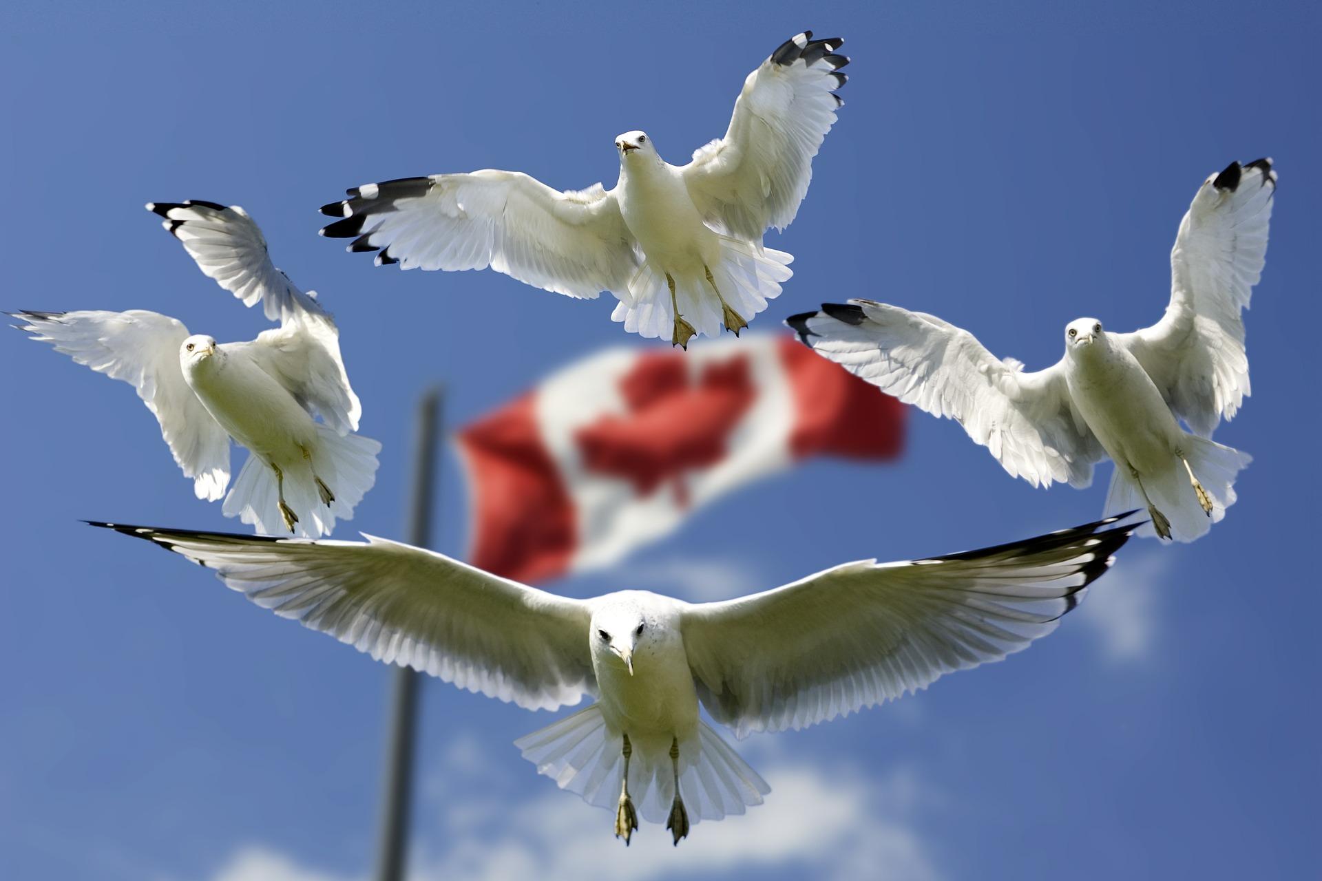 予断を許さないカナダ、中国の外交関係